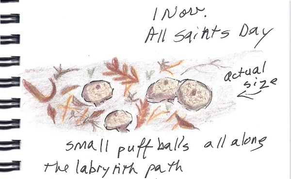 Nature Journal - Puff Balls