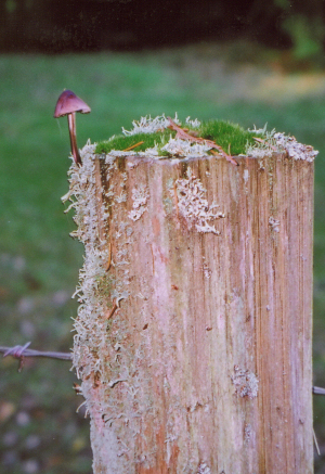 MushroomFencePost -- Resized BB